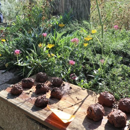 seed balls!!!!
