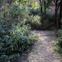 wildlife path